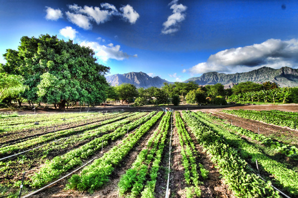 Il Fattore Brucia Grasso e l'agricoltura biologica