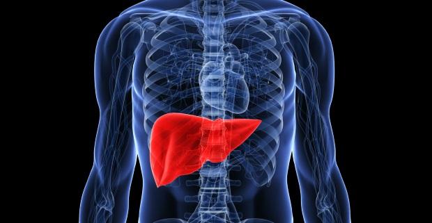 Il Fattore Brucia Grasso e il fegato